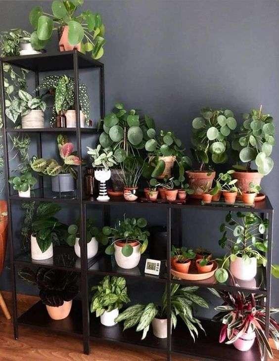Aménagement d'une multitude de plantes vertes
